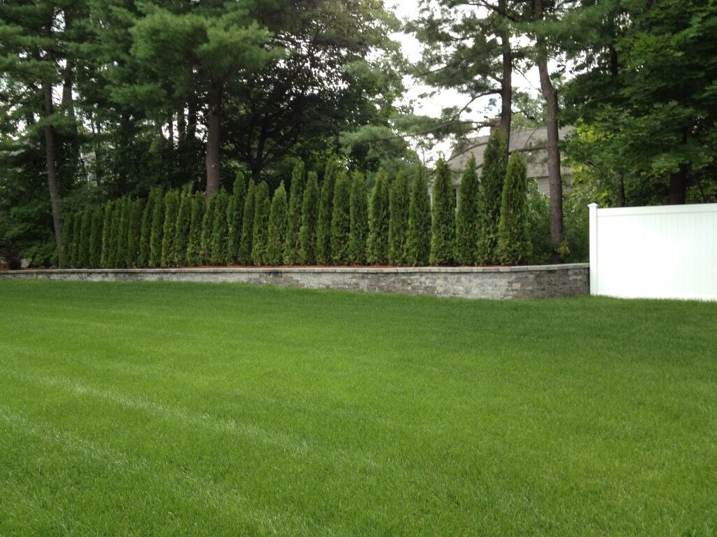 Privacy Hedge, Lush Green Grass, Techo Block Wall